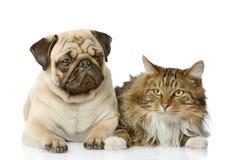 De kat ligt dichtbij een hond stock foto's