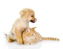 De kat ligt dichtbij een hond. weg het kijken royalty-vrije stock fotografie