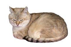 De kat ligt met zijn ogen die gesloten en zijn poten verbergen royalty-vrije stock fotografie