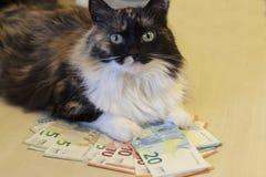 De kat ligt op bankbiljetten van 5, 10, 20 euro stock foto