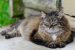 De kat ligt op de portiek Stock Fotografie