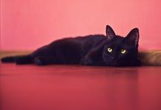 De kat ligt op een vloer Stock Fotografie