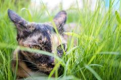 De kat ligt op gras in de tuin Stock Afbeeldingen