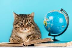 De kat ligt op het boek gelezen boek de kat in de bibliotheek royalty-vrije stock afbeelding