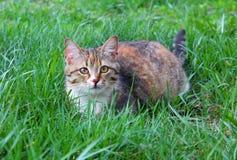 De kat ligt op het gazon royalty-vrije stock afbeeldingen