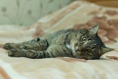 De kat ligt op de plaid van het bed stock fotografie