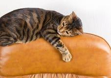 De kat ligt op rug van gekraste leerleunstoel Gekrast leathe royalty-vrije stock fotografie