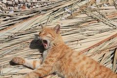 De kat ligt op stro stock afbeeldingen