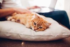 De kat ligt thuis op een hoofdkussen dichtbij zijn meester met laptop stock afbeeldingen