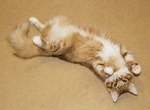 de kat ligt zich uitrekt op beige tapijt Stock Fotografie