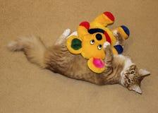 de kat ligt zich uitrekt op beige tapijt Royalty-vrije Stock Afbeeldingen