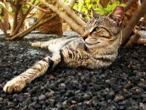 De Kat Lounging van de gestreepte kat Stock Afbeelding