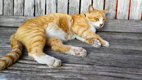 De kat is lui royalty-vrije stock foto