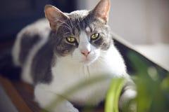 De kat met expressieve heldere ogen ligt op de vensterbank royalty-vrije stock fotografie