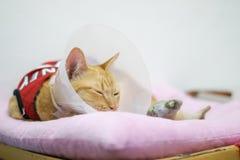 De kat met kraag voor beschermt lik zijn zelf na sterilisatie stock afbeeldingen
