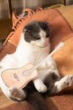 De kat met miniatuurdocument gitaar zit op het bed Stock Afbeelding