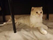 De kat in mijn ruimte stock foto's