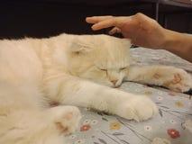 De kat in mijn ruimte stock foto