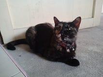 De kat in mijn ruimte stock afbeeldingen