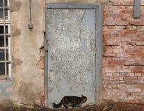 De kat neemt langs de muur heimelijk Stock Foto