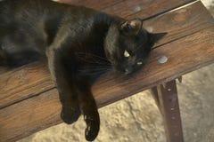 De kat onbeweeglijk Stock Afbeeldingen