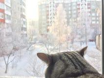 De kat onderzoekt het venster Royalty-vrije Stock Afbeelding