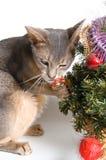 De kat ontmoet Nieuwjaar Stock Afbeeldingen