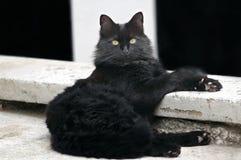 De kat ontspant Stock Foto's