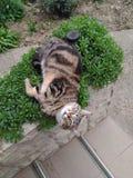 De kat ontspant Royalty-vrije Stock Afbeeldingen