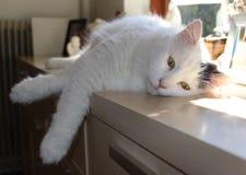 De kat ontspant Royalty-vrije Stock Afbeelding