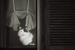 De kat ontspant binnen Stock Foto's