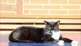 De kat ontspant in de zon stock video