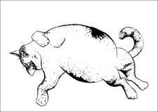 De kat ontspant zwart-witte tekening - Stock Afbeelding