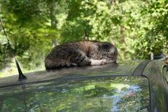 De kat op de auto stock foto