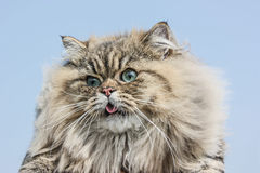 De kat is op de hemelachtergrond Royalty-vrije Stock Afbeeldingen
