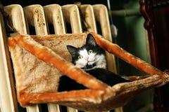 de kat is op de radiator Stock Afbeelding