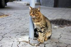 De kat op de stoep kijkt verafgelegen Stock Foto's