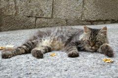 De kat op de straat Stock Foto