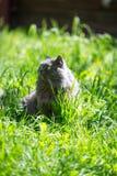 De kat op een gras Royalty-vrije Stock Foto