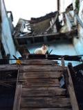 De kat over het oude ruïnegebouw Royalty-vrije Stock Foto