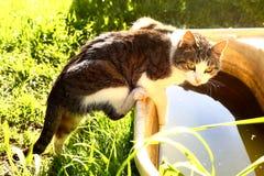 De kat probeert om aan het water in oud babybad te krijgen royalty-vrije stock afbeeldingen
