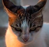 De kat rechtstreeks van hel Stock Foto