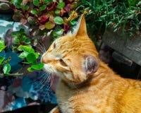 De kat ruikt groen stock fotografie
