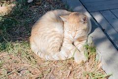 De kat rust dichtbij de rand op de straat Royalty-vrije Stock Afbeelding