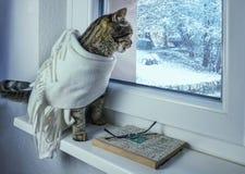 De kat in de sjaal kijkt uit het venster royalty-vrije stock afbeelding