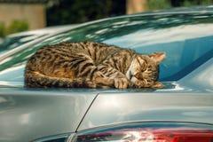 De kat slaapt in een auto Royalty-vrije Stock Foto
