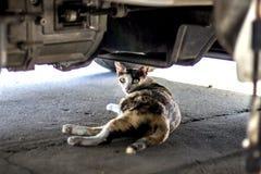 De kat slaapt onder de auto royalty-vrije stock afbeelding