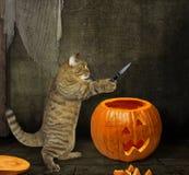 De kat snijdt pompoen voor Halloween stock foto's