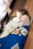 De kat toont Stock Afbeeldingen