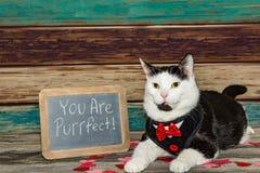 De Kat van Aanbiddelijk Valentine stock fotografie
